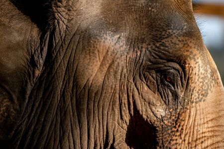 Close up of an elephants face.