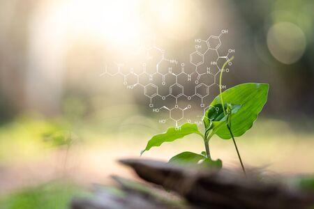 Plants background with biochemistry structure.
