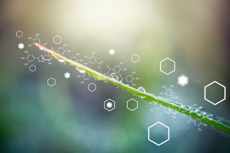 Fondo de plantas con estructura bioquímica. Foto de archivo