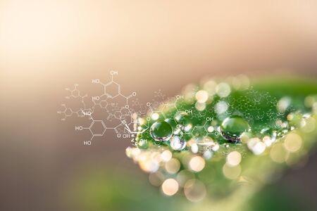 Plants background with biochemistry structure. Foto de archivo