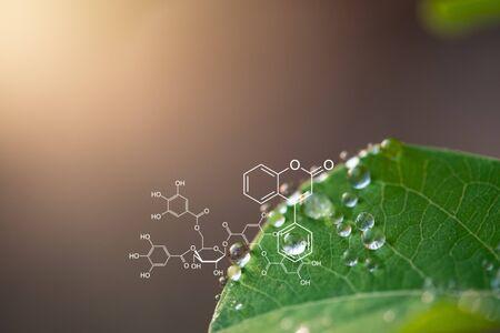 Fond de plantes avec structure biochimique. Banque d'images