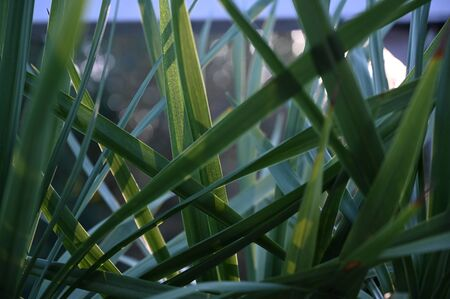 reed, background, nature