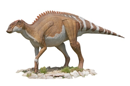 Dicraeosaurus Dinosaur - white background