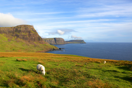 isles: Neist Point is a viewpoint on the most westerly point of Isle of Skye, Scotland. Sheeps in the pasture. Stock Photo
