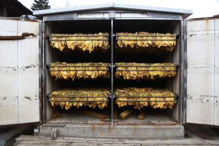 The classic method of drying tobacco in the kiln Stock Photo