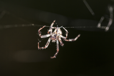 arachnoid: face of spider