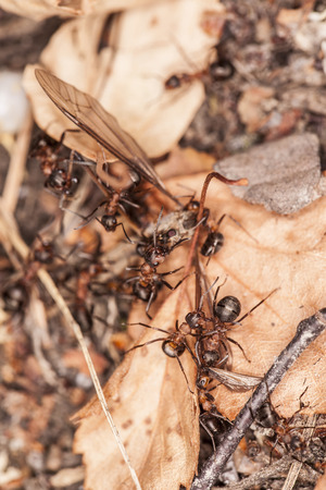 into: mosquito fell into the anthill