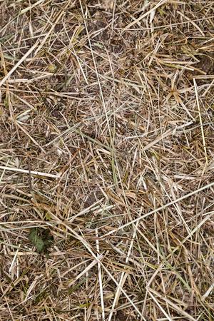 ruminate: dry grass