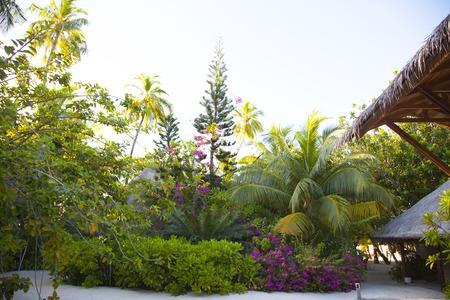 vegetation: vegetation in the Maldives