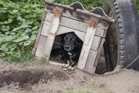 perro asustado: perro asustado que se sienta en la perrera Foto de archivo