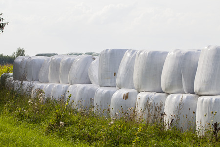 animal feed: bales of hay, animal feed for winter