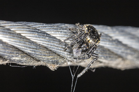little black spider siting on a rope