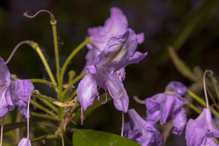 pulsating: Pulsating purple flowers Stock Photo