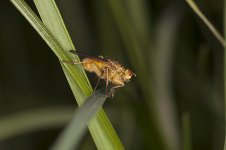 Gold fly siting on the grass Stock Photo