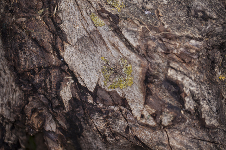 Closeup of an old trunk, background