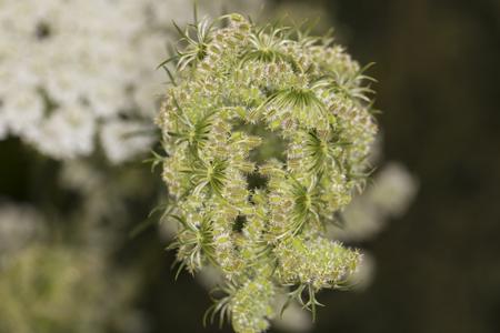 strange green plant, closeup, top view
