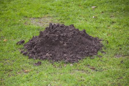 molehill on the grass close up Stock Photo