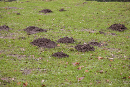 large number of moles on wages