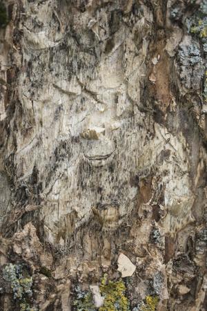 tree bark, close up, macro picture