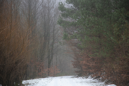 road and trees in the fog, snow