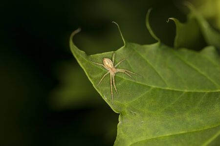 small spider sitting on the leaf