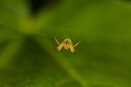spider hangs on the spider web