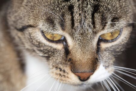 portrait of a cat, closeup on eyes