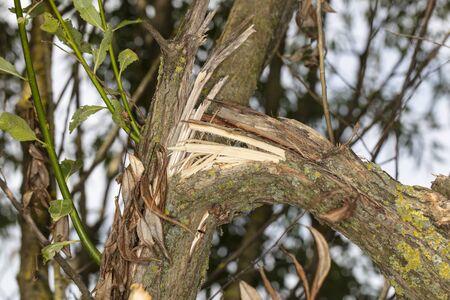 broken tree branch, close up