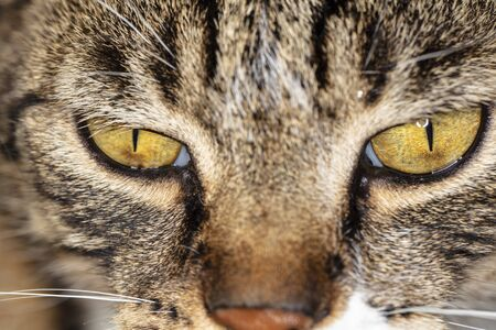 close up on a cats eyes