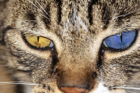 two-colored cat's eyes, closeup Фото со стока - 129719542
