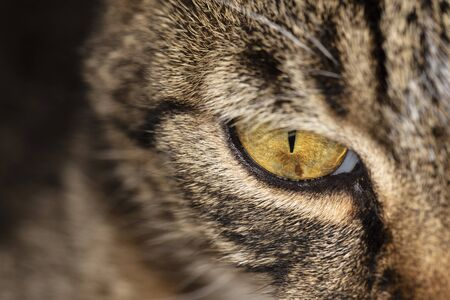 close up on a cats eye