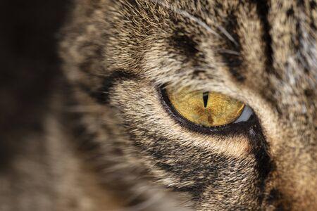 close up on a cat's eye Фото со стока - 129719473