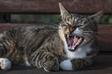 the cat lies on the bench, yawns