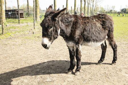 portrait of an old donkey in a pasture