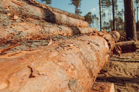Forest destroyed by human development, trees felled and stored for the industry.