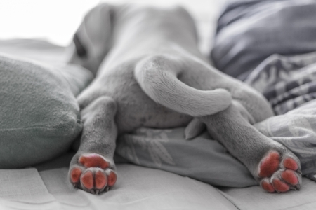 Puppy paws Stock Photo - 20828052