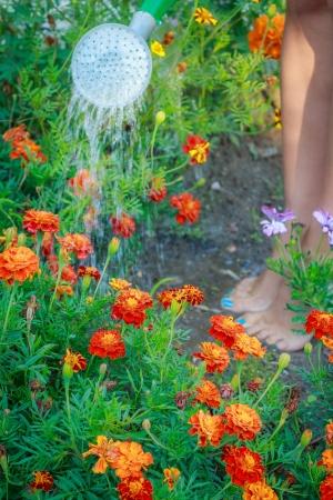 Woman watering flowers in the garden