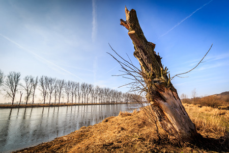 felled: Felled tree by the river