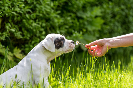 Puppy with flower Stock Photo