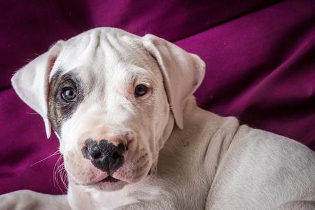 Cute puppy in studio Stock Photo