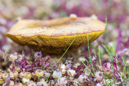 Edible mushroom surrounded by samll colorfull flowers