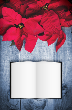 parchment texture: Red poinsettia Christmas flower on wooden background. Open book with copy space.