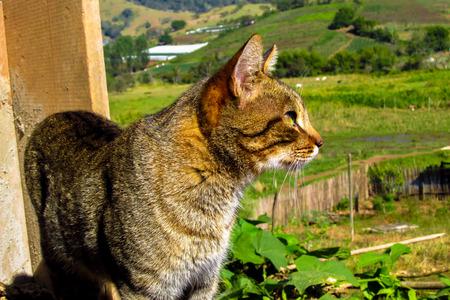 feline: feline