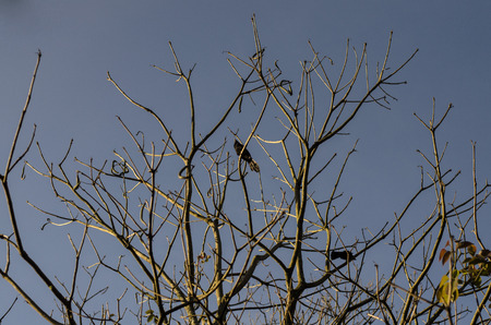 lonely bird: Lonely bird over a tree