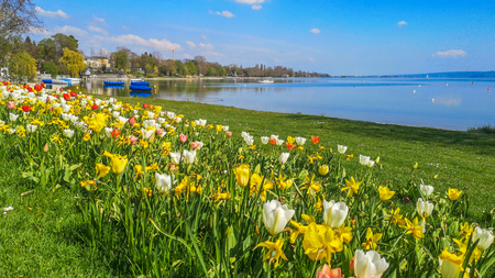 Lake shore Bodensee in summer with colorful tulips on the lake shore