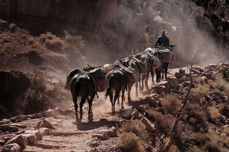 cowboy at Grand Canyon