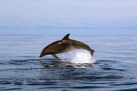 돌고래 스톡 콘텐츠