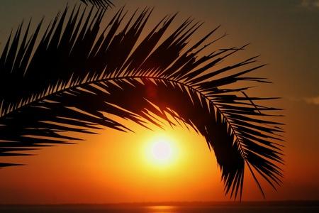 sunset palm trees: sun down