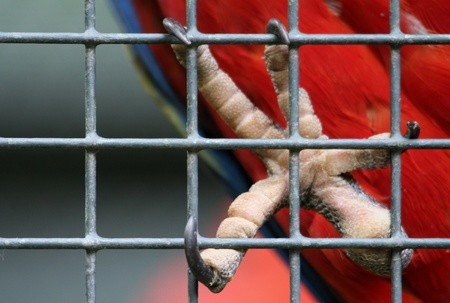 captivity: Red parrot behind fence Stock Photo
