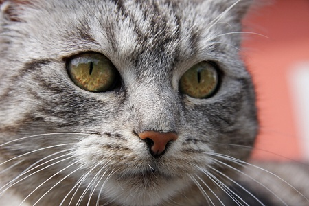 cat eyes Stock Photo - 11833853